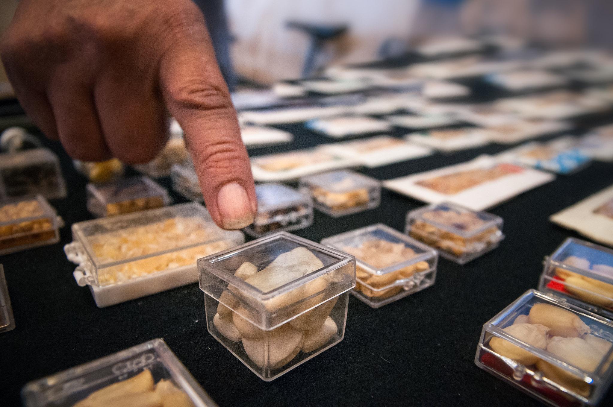 cultivos transgénicos México