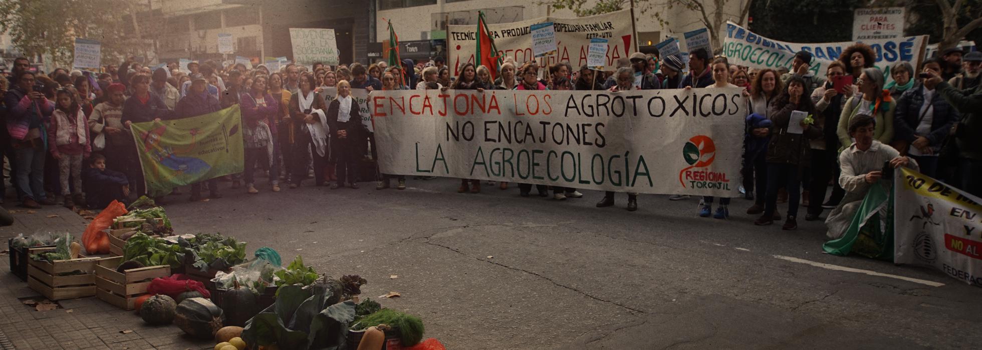 ¡No más demora, agroecología ahora!