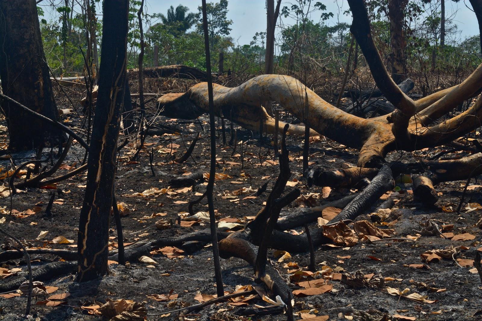 La lógica del ganar-ganar por detrás de los incendios en la Amazonia