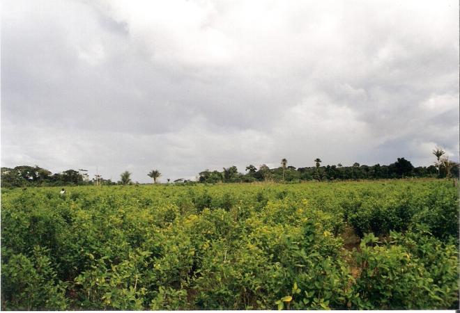 SOS Putumayo: Disparan contra campesinos durante erradicación forzada