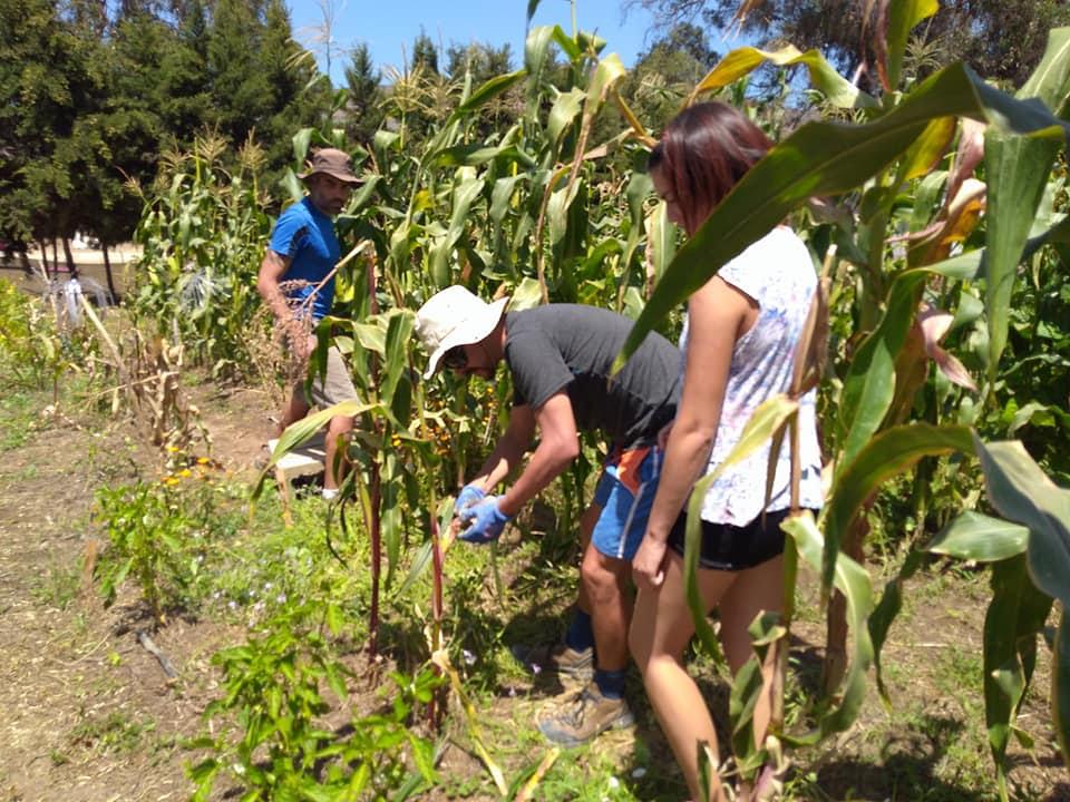 escuela-de-agroecologia-germinar
